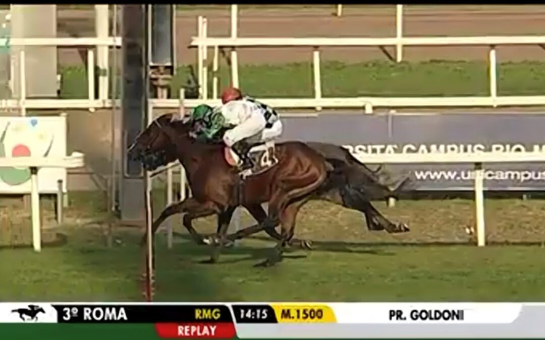 Oggi alla terza corsa di Roma vince Hold me Close!!!!!!! Dalla nostra fattrice Mara Gibraltar